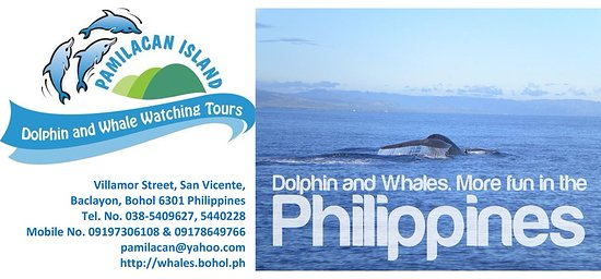 Pamilacan Island Dolphin and Whale Watching Tours