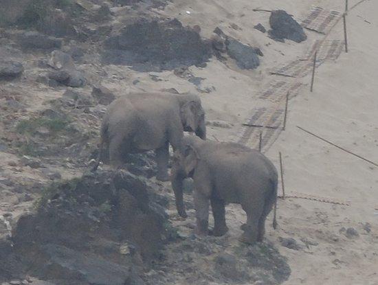 Mekong Elephant Park: lungo il riverside 3