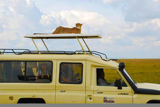Steenbok Safaris and Car Hire