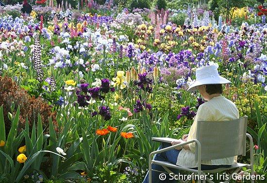Schreiner's Iris Gardens: A tranquil setting to get away for a spell.