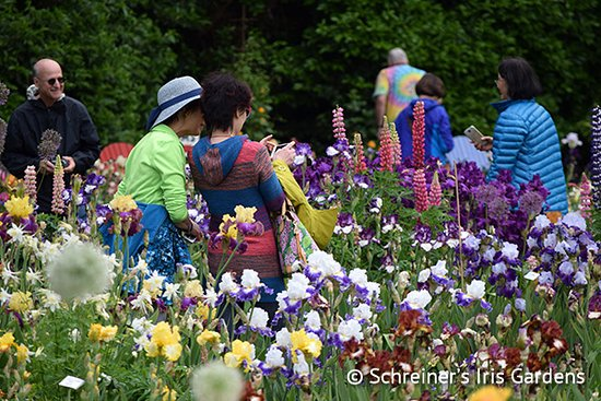 Salem, OR: Visitors enjoy the colorful display of blooms.