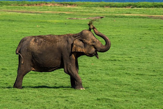 Kandalama, Sri Lanka: Minneriya National Park