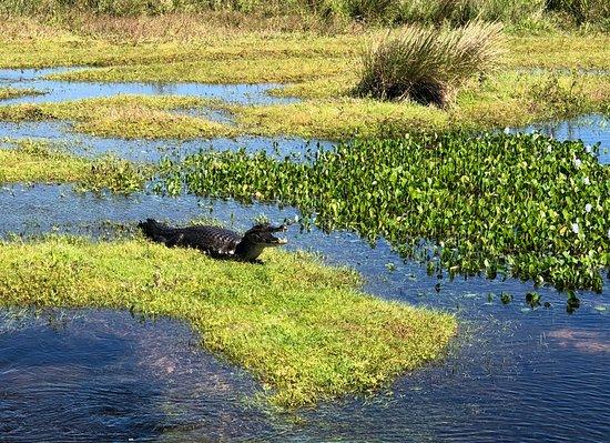 Puerto Valle - Hotel de Esteros : We saw caiman on all boat trips!