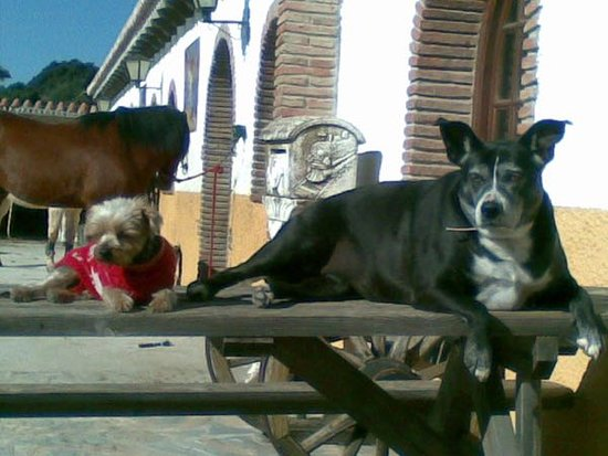 Finca La Alegria: many friendly dogs ( and cats and other animals) are on the ground of the Finca