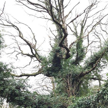 Rathgar, Ireland: photo1.jpg