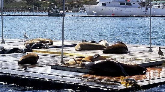 San Diego Seal Tours: sea lions on docks