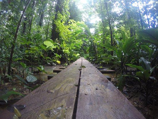 Isla Solarte, Panama/Panamá: Hike to Hospital point