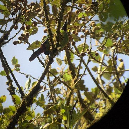 Santa Elena Cloud Forest Reserve: photo3.jpg