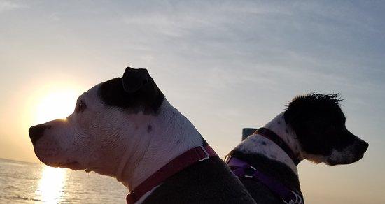 White Gate Court: Pets enjoying the Sunset....