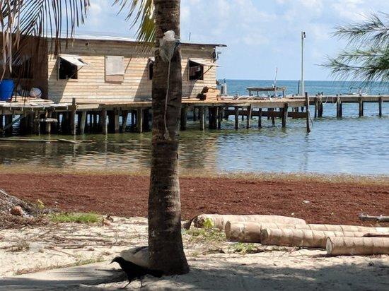 Caye Caulker, Belize: IMG_20180308_094152_large.jpg