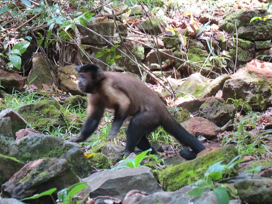 Ile Royale, French Guiana: Monkey