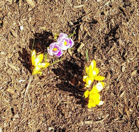 Marshside Restaurant: Ground are already blooming
