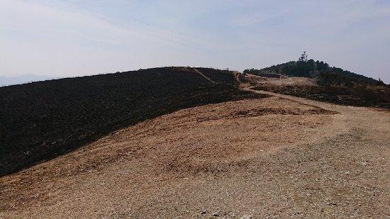 Kimino-cho, ญี่ปุ่น: 生石高原