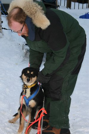 """YoopAK Kennel and Tours: Musher guide Ryan preparing 7 month old """"July"""" for her puppy training run."""