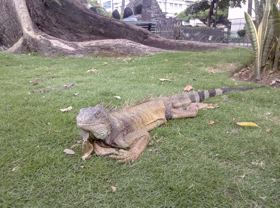 Unipark by Oro Verde Hotels: Las Iguanas
