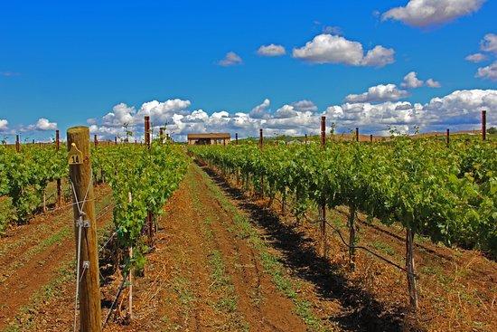 Zillah, WA: Vineyard and tasting room
