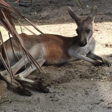 Brevard Zoo: photo2.jpg