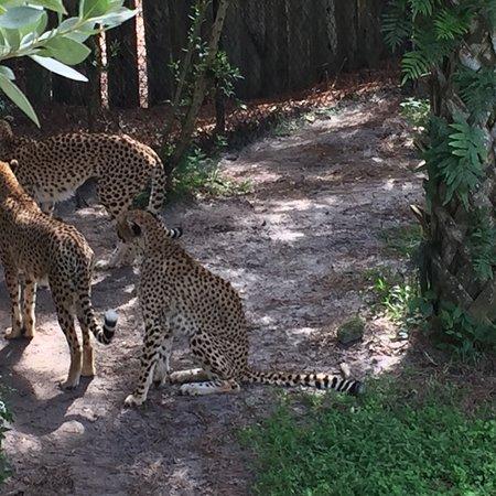 Brevard Zoo : photo3.jpg