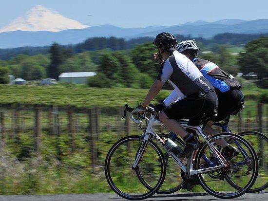 Bicycling through farmland near Canby