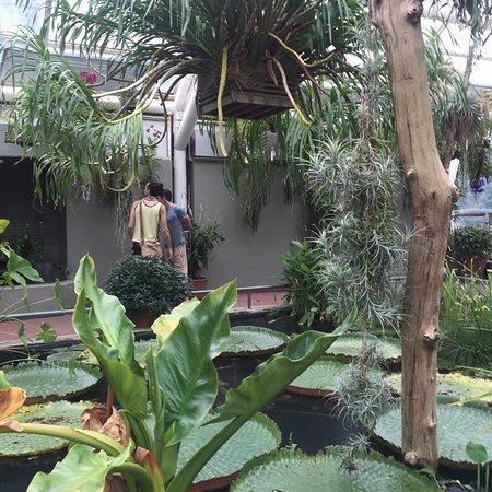 6BC Botanical Garden