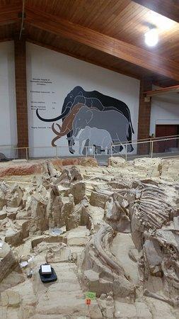 Mammoth Site of Hot Springs – fénykép