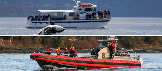 Western Prince Whale Watching & Wildlife Tours: Fast boats will get you to the whales! Choose the Western Prince II or the Western Explorer II!