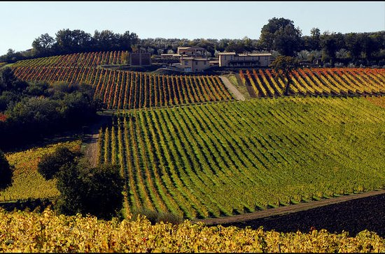 Private Umbria Wine Day Trip from