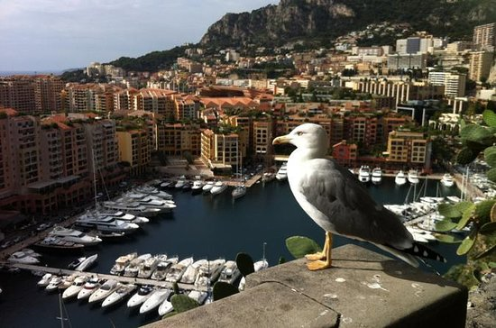 MONACO AND THE FRENCH RIVIERA from...