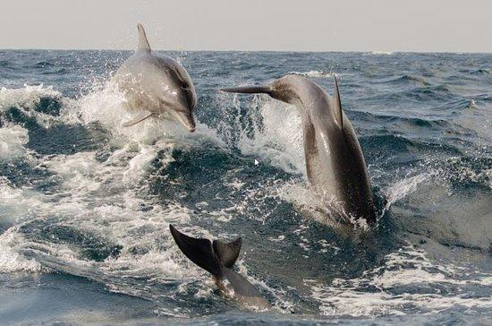 Tour Privado de 2 Horas em Dolphin em...