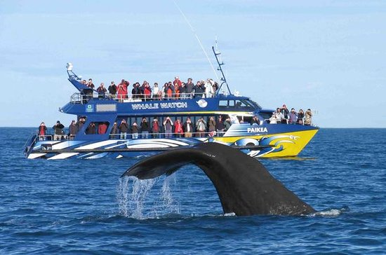 2 Day Tour to Bentota & Whale...