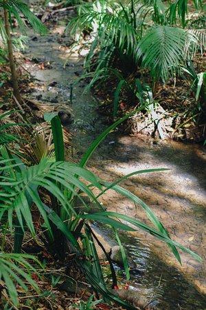 Byron Bay Rainforest Tour