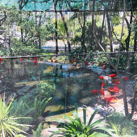 Hong Kong Zoological And Botanical Gardens 2018 All You Need To Know Before You Go With