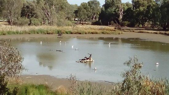 Tatura, Australia: Main billabong from the viewing platform