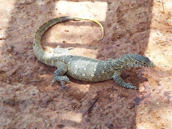 La Petite Cote, Senegal: caché pres de l'étang a crocodile