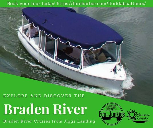 Bradenton, Floryda: Alligator, Birds and beautiful picturesque river.