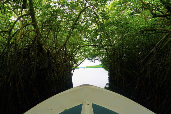 Galle District, Sri Lanka: Mangrove forest