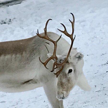 Ylitornio, Finland: photo0.jpg