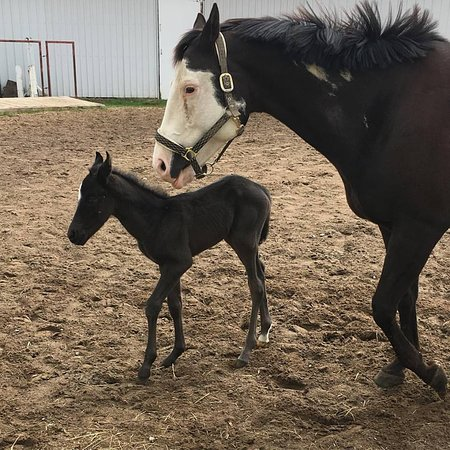 Trenton, Canadá: New baby that was born at the barn.