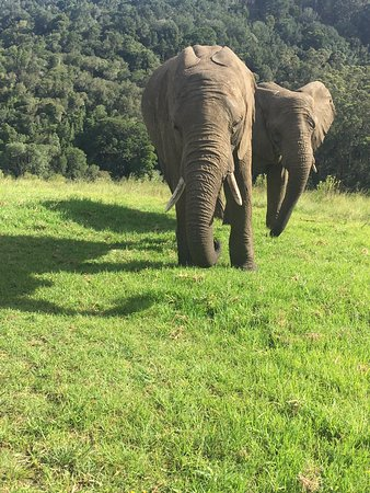 Knysna Elephant Park Lodge: Morning Interaction