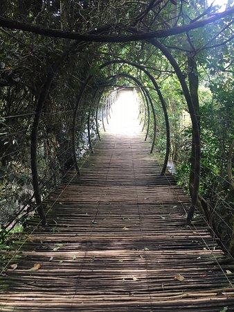 Birds of Eden: Bridge