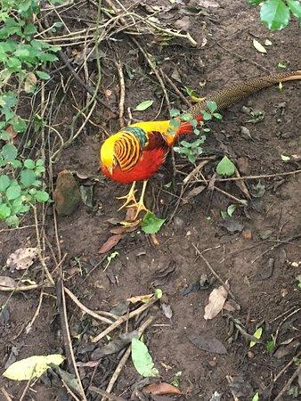Birds of Eden: Colorful Bird