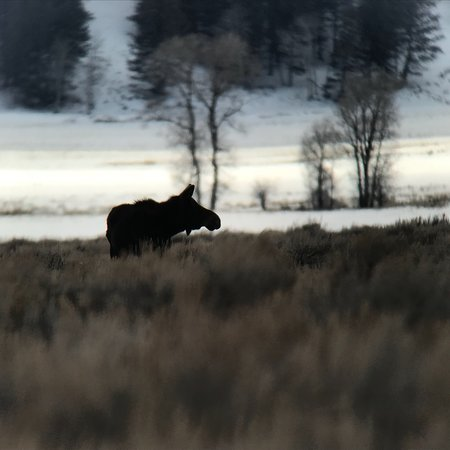 Jackson Hole Eco Tour Adventures: photo1.jpg