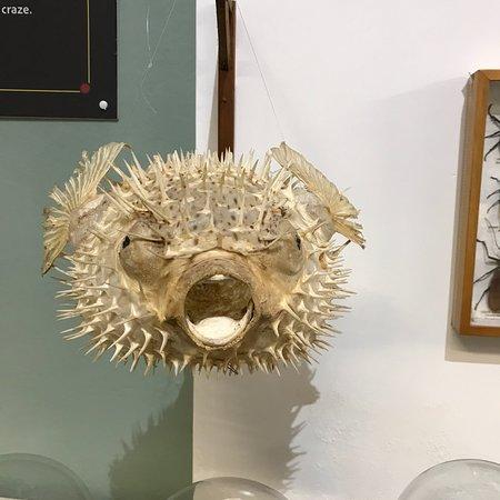 Ilfracombe Museum: photo6.jpg