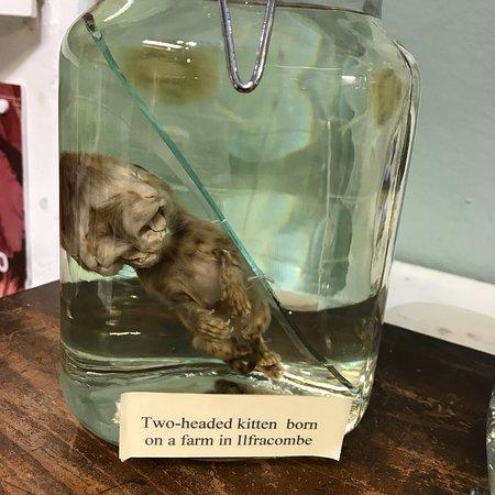 Ilfracombe Museum: photo7.jpg