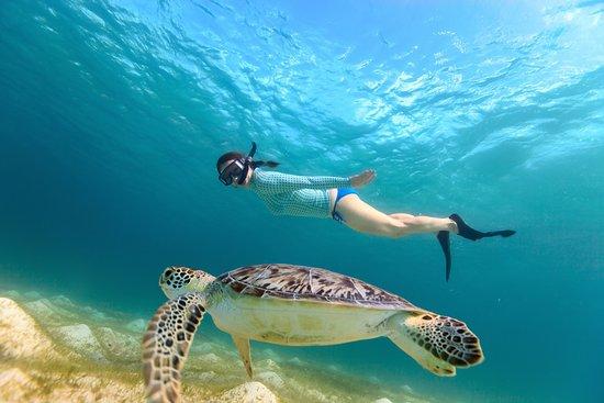 Posada Acuario: snorkeling  con tortugas en los roques