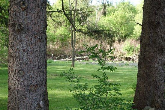Slaterville Springs, NY: Back yard