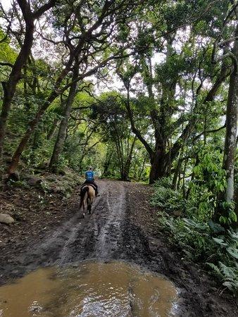 Waipi'o On Horseback: 20180328_145808_large.jpg