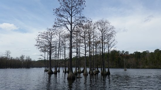 Cheraw, Güney Carolina: we rented a boat to go see the cypress tress