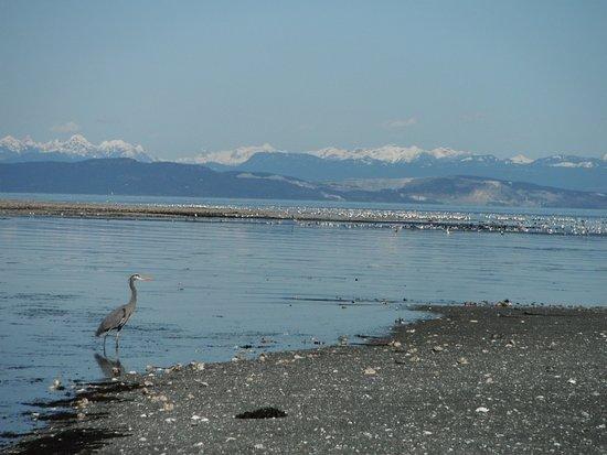 Denman Island照片