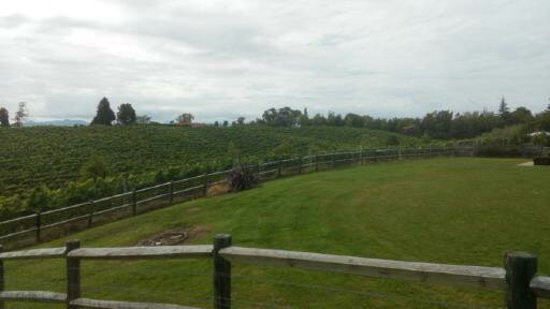 Ruby Bay, New Zealand: Rolling yard and vineyard
